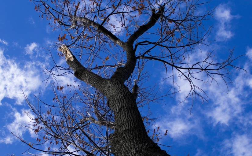 Looking Up a Tree (In A Photo)